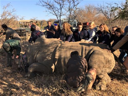 EFE Students providing medical aid to a South African rhino